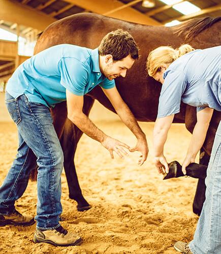 Mit der Pferdemassage lässt sich gut verspannte Muskulatur lösen, besonders mit der Stresspunktmassage beim Pferd