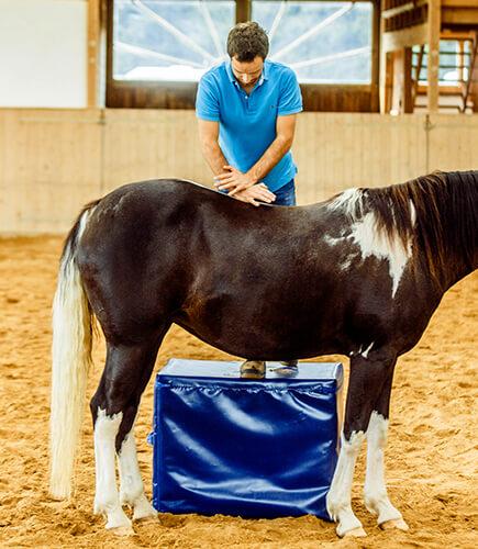 Die Chiropraktik für Pferde ist besonders bei Rückenproblemen beim Pferd geeignet.