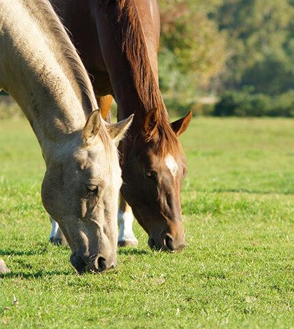 verletzungen beim pferd liste
